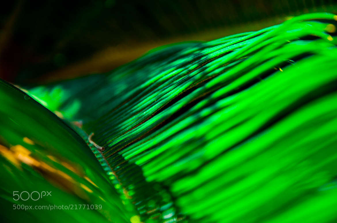 Photograph Just a Leaf... by Eyal Joseph Osterman on 500px
