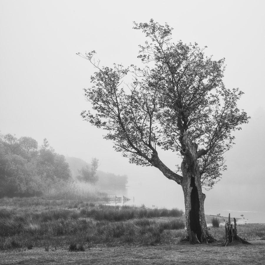 Tree at Strandshag Bay
