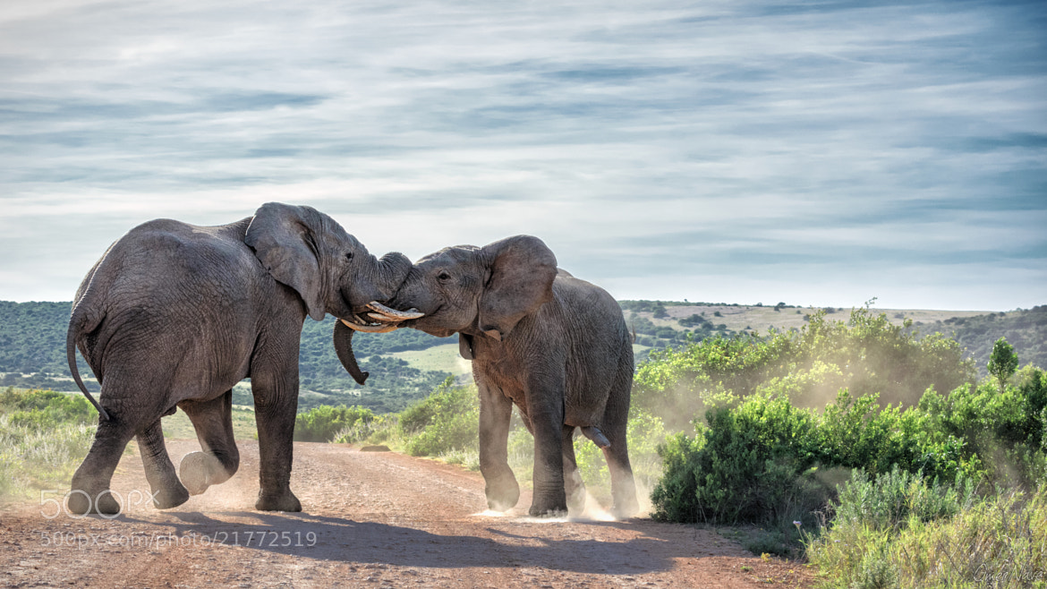 Photograph Addo Despute 2.0 by Omer Nave on 500px