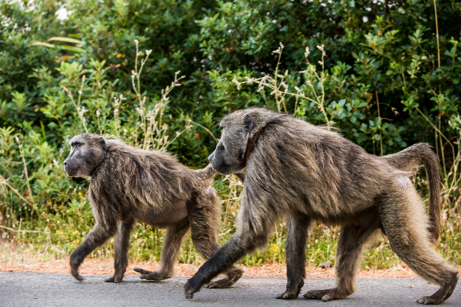 Photograph Cape Baboons by Paul Todd on 500px