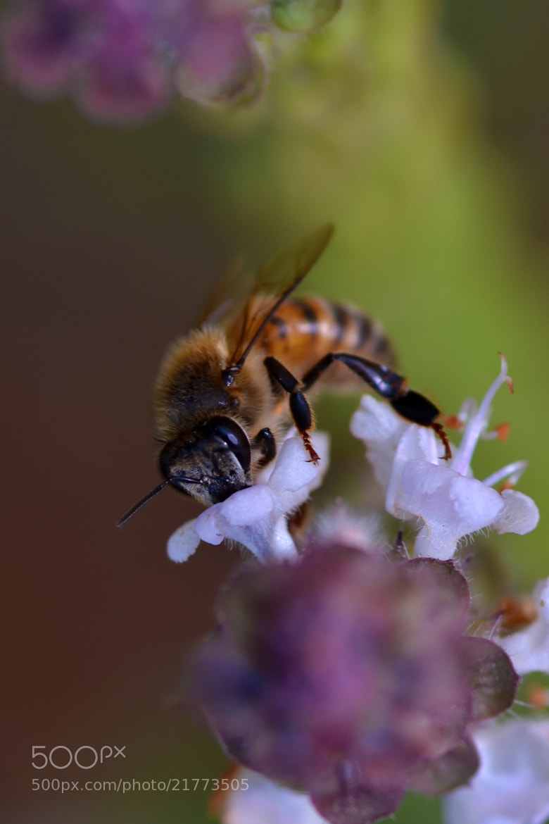 Photograph Bee! by Adel Esmael on 500px