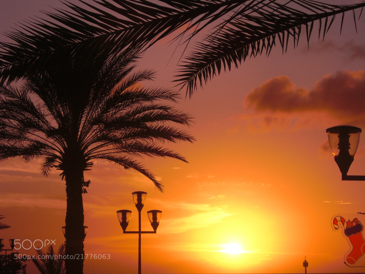 Photograph Sunset Palm by Florian  Carl on 500px