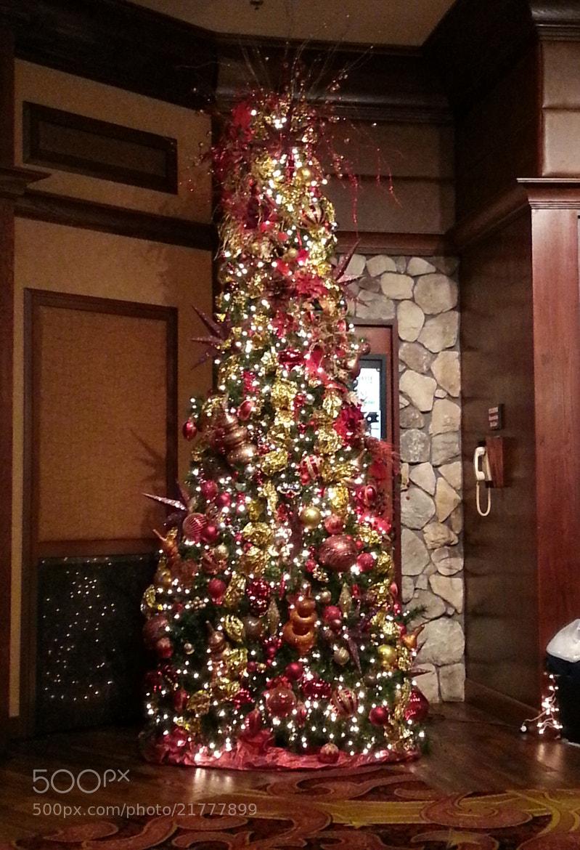 Photograph O Christmas Tree, O Christmas Tree by Ruth Spicer on 500px