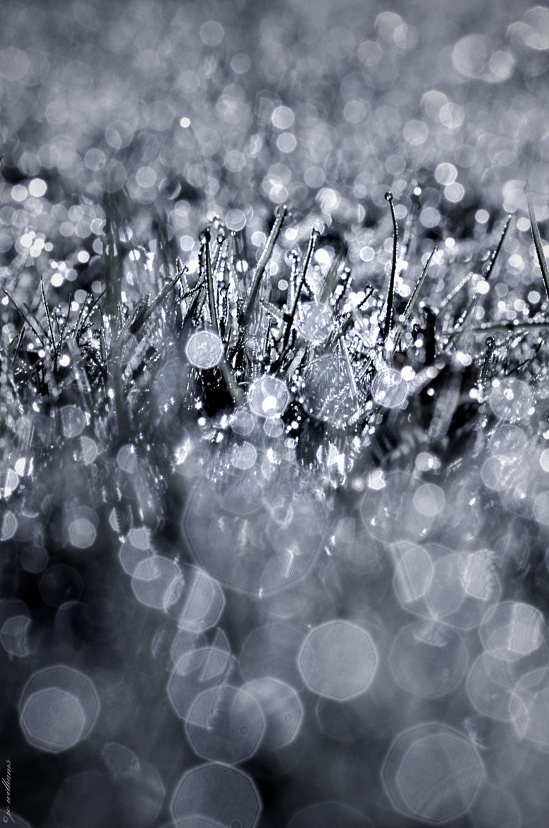 Photograph BLING`BLING` by jo williams on 500px