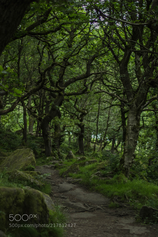 A Path To Rivendell?
