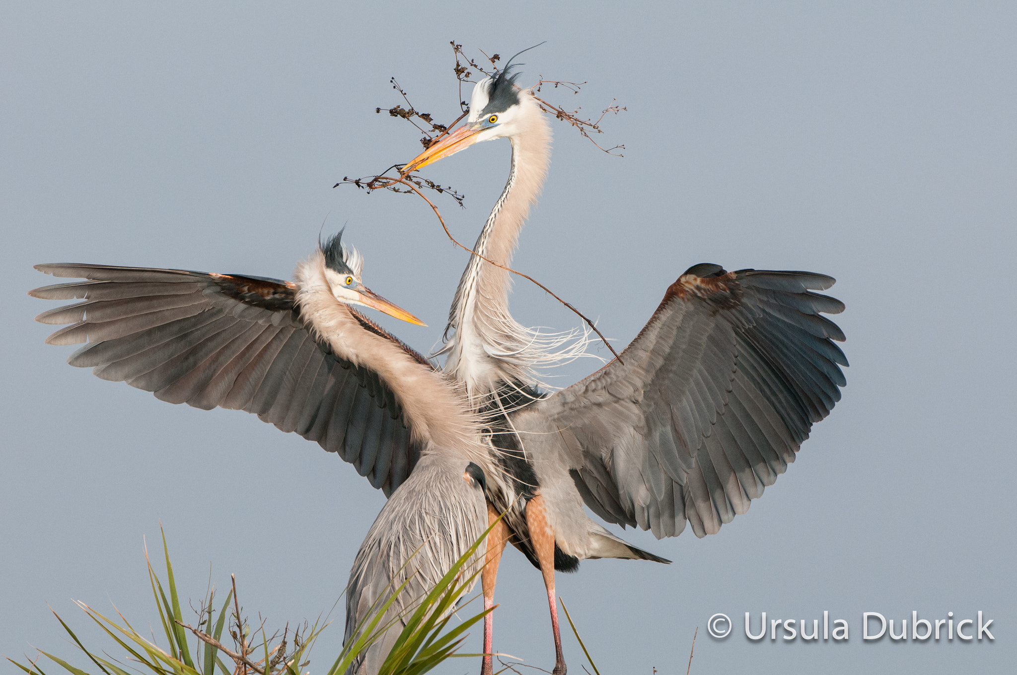 Photograph Nesting Material Delivery by Ursula Dubrick on 500px