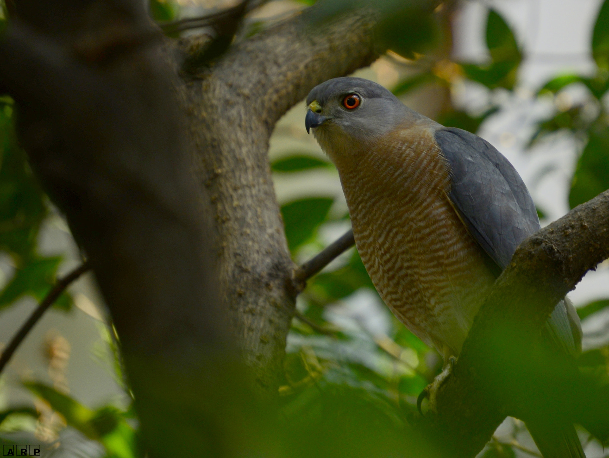 Photograph Red Eye Correction  by Abhijit Ranade on 500px