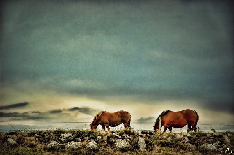 Photograph Les 2 chevaux by Xavier D'ABRIGEON on 500px