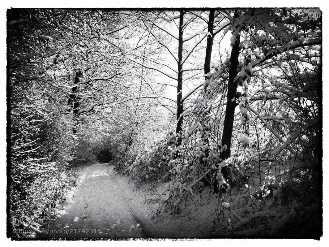 Photograph Winter by Ulrich Fleischer on 500px
