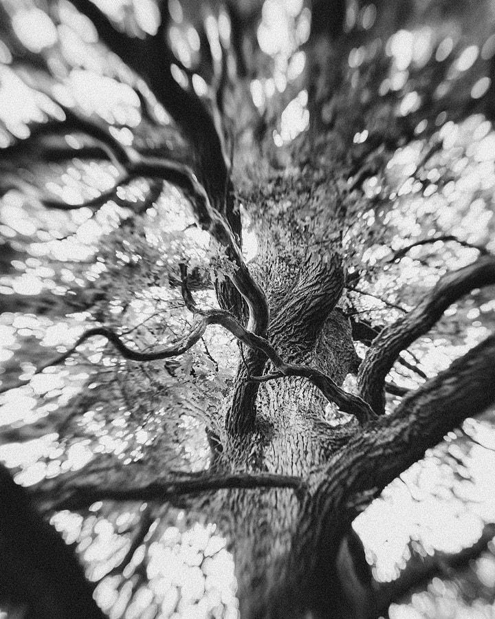 Under The Old Oak