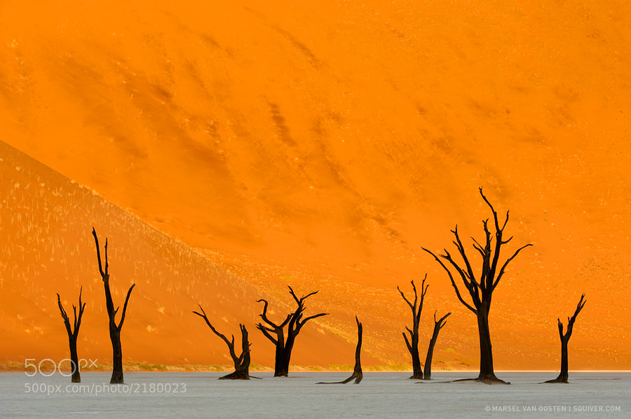 Photograph Death Row by Marsel van Oosten on 500px