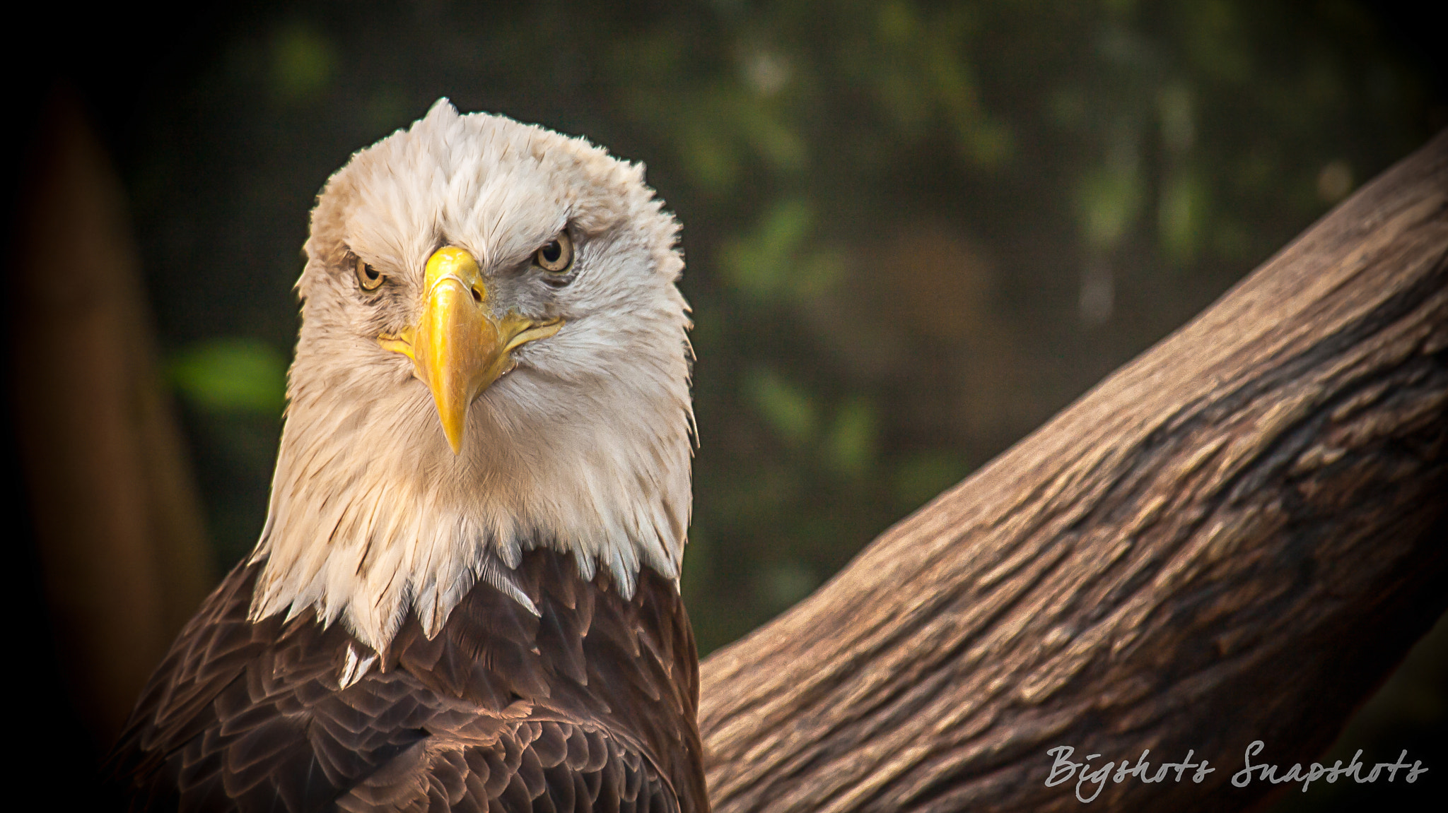 Photograph You looking at ME!!! by Richard Fletcher on 500px