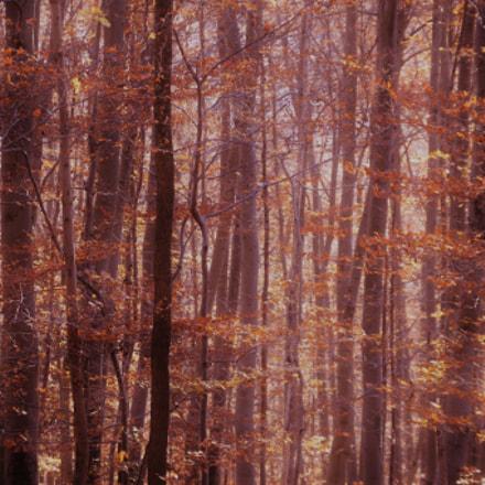 ....autumn