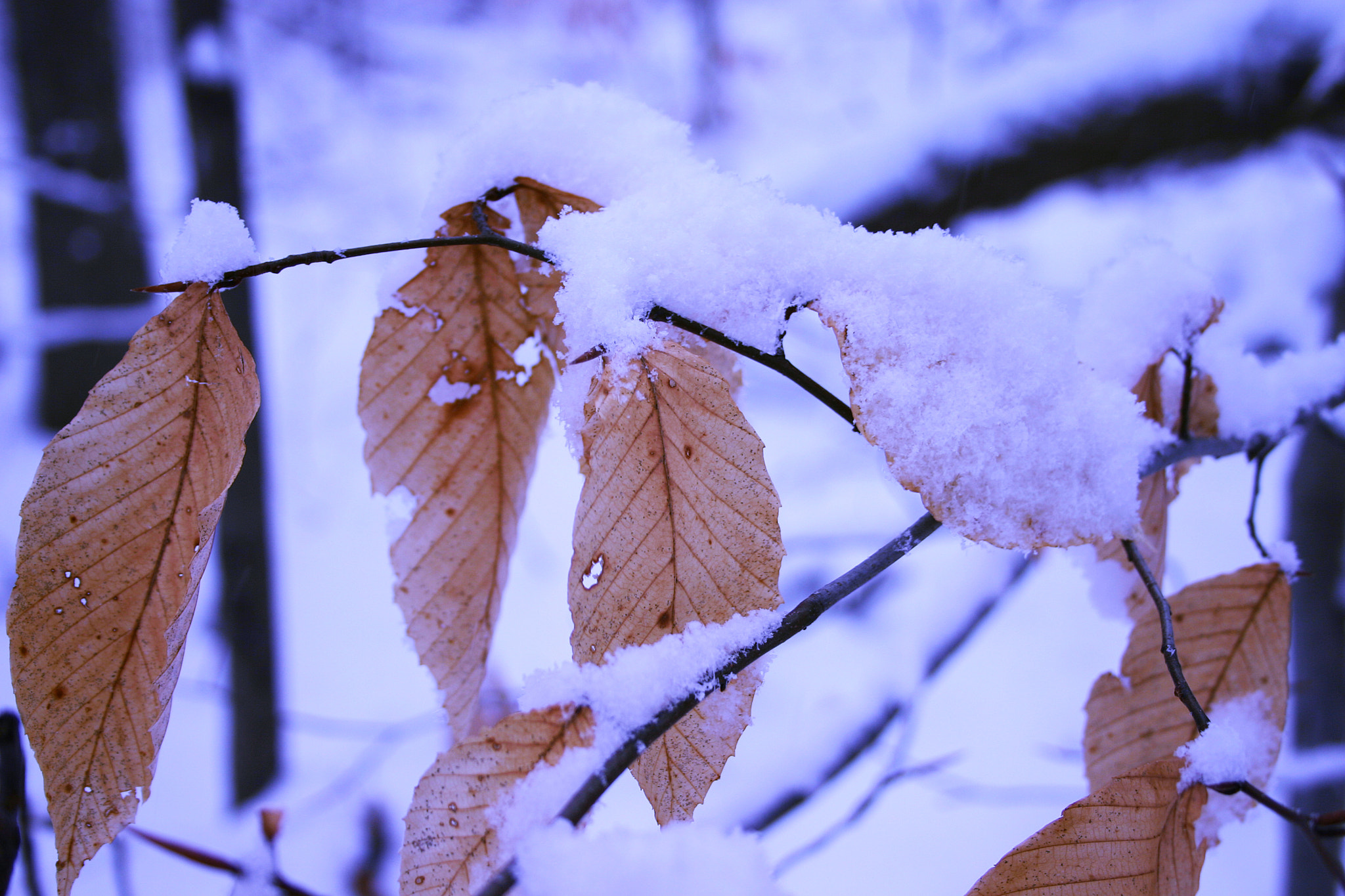 Photograph Winter Coat by PhotoPalette  on 500px