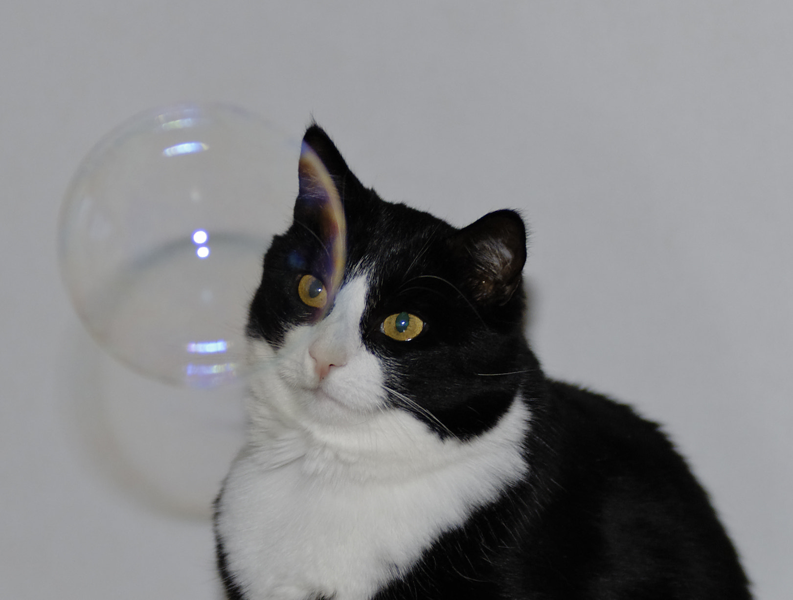 Photograph Pixie with bubble by Eva & Jörgen Eriksson on 500px