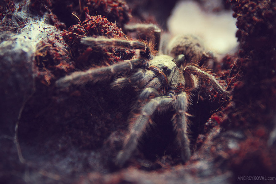 Photograph Spider by Andrey Koval on 500px