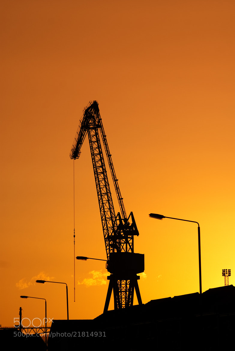 Photograph Crane at Sunset by Emma Samuel on 500px