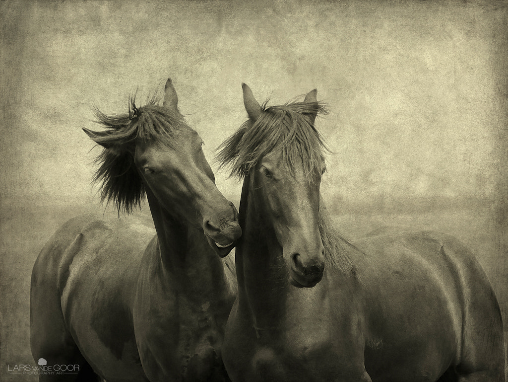 Photograph Horses Don't Whisper, They Just Talk by Lars van de Goor on 500px
