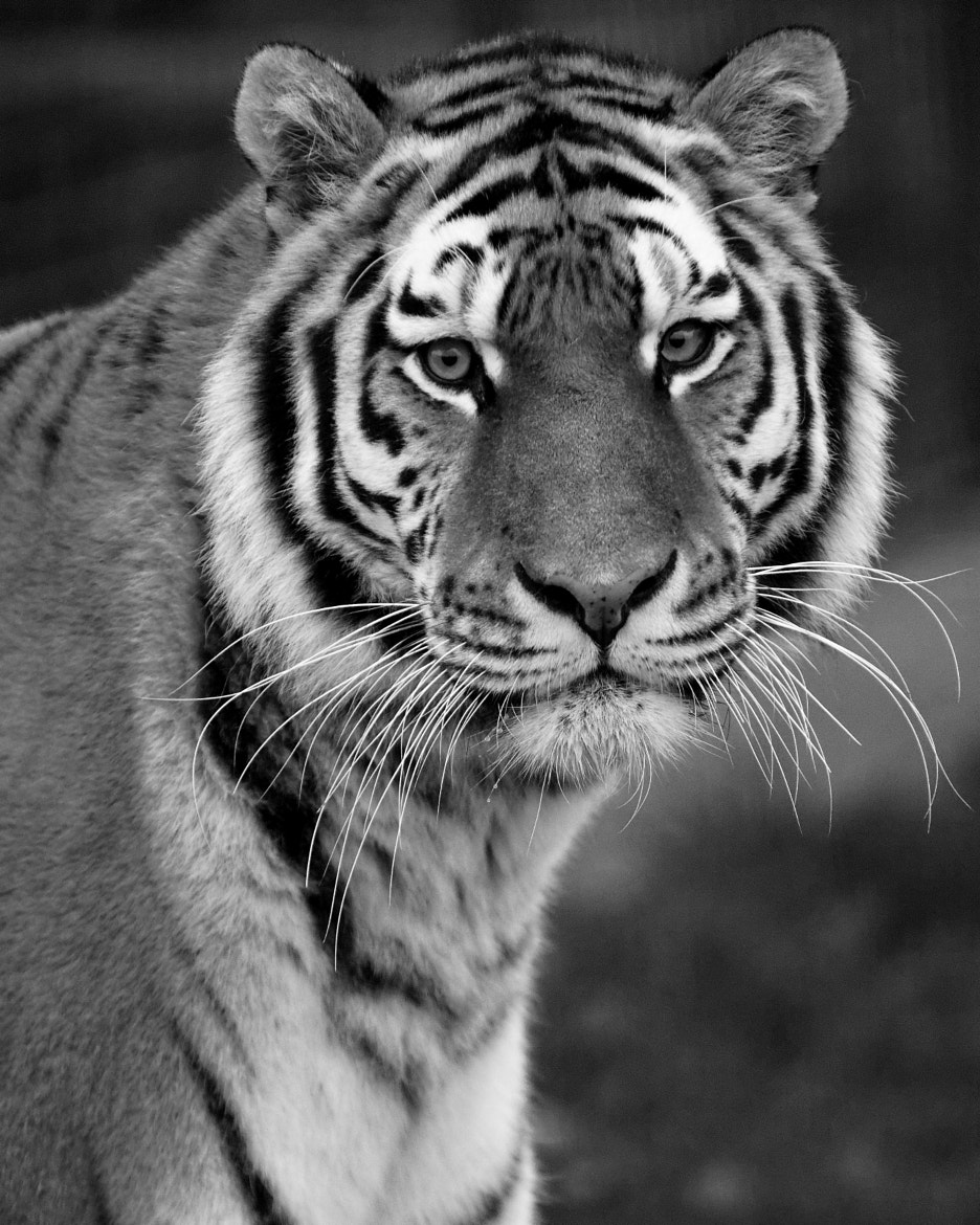 Photograph Monochrome Dignity by Guy Swarbrick on 500px