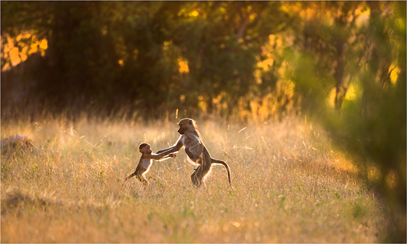 Photograph Dancing in the Bush  by Valerie BLANCA on 500px
