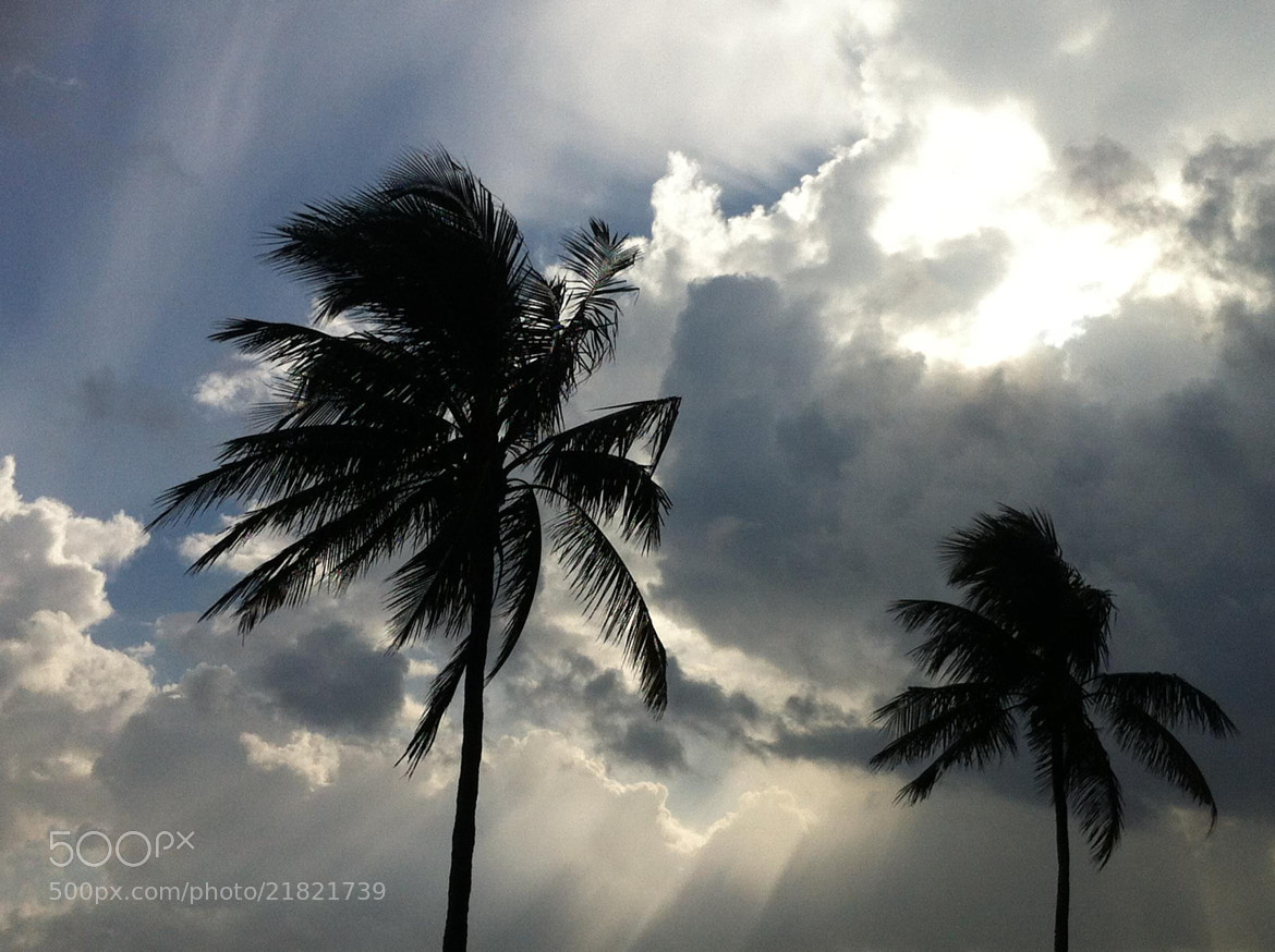 Photograph Dreary Palms by Erich B. on 500px