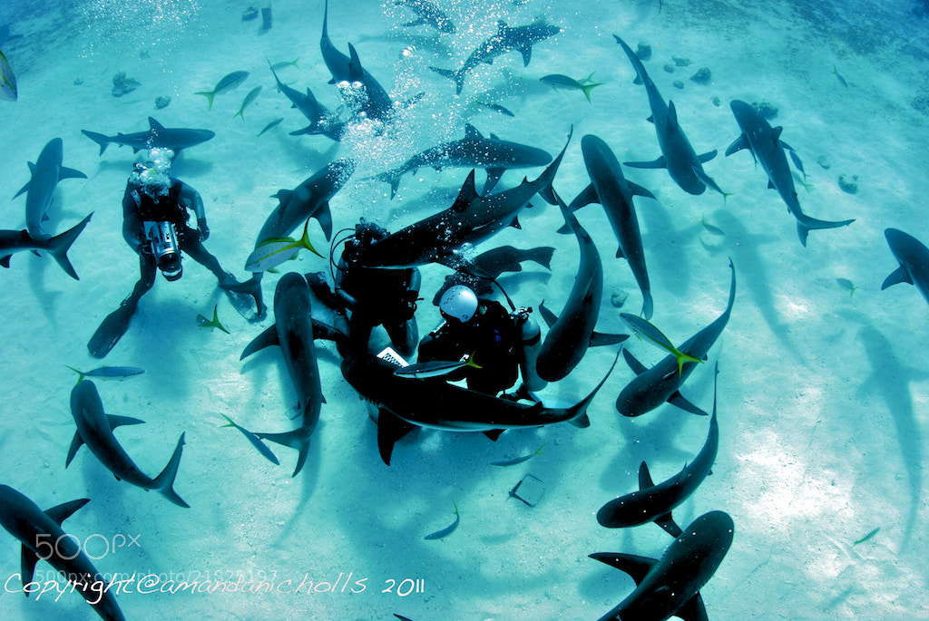 Photograph Feeding Frenzy by Amanda Nicholls on 500px
