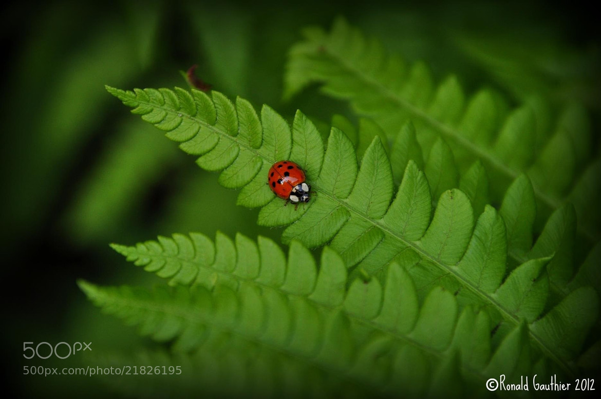 Photograph Bug Life by Ron Gauthier on 500px
