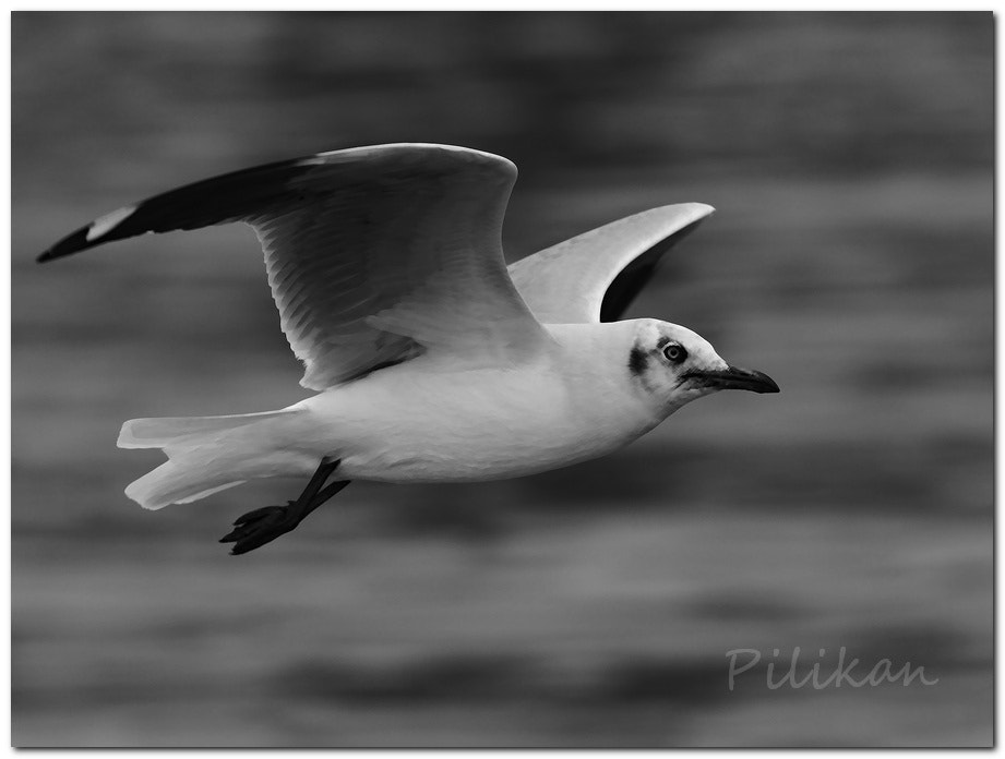 Photograph Flight by Pilikan Ch on 500px