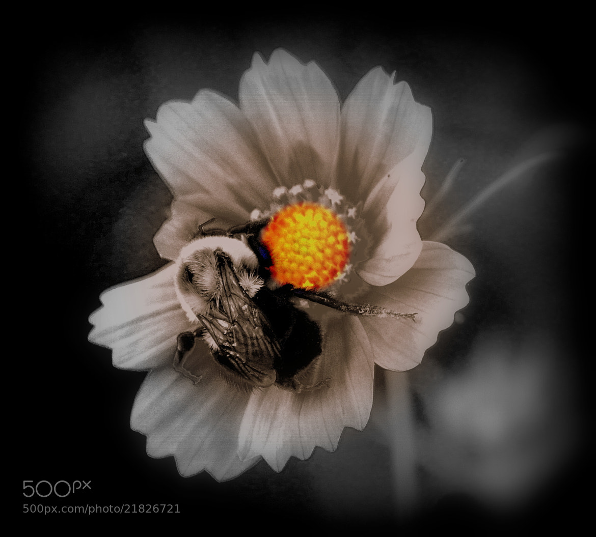 Photograph Bumble Bee and flower by Uta Abate on 500px