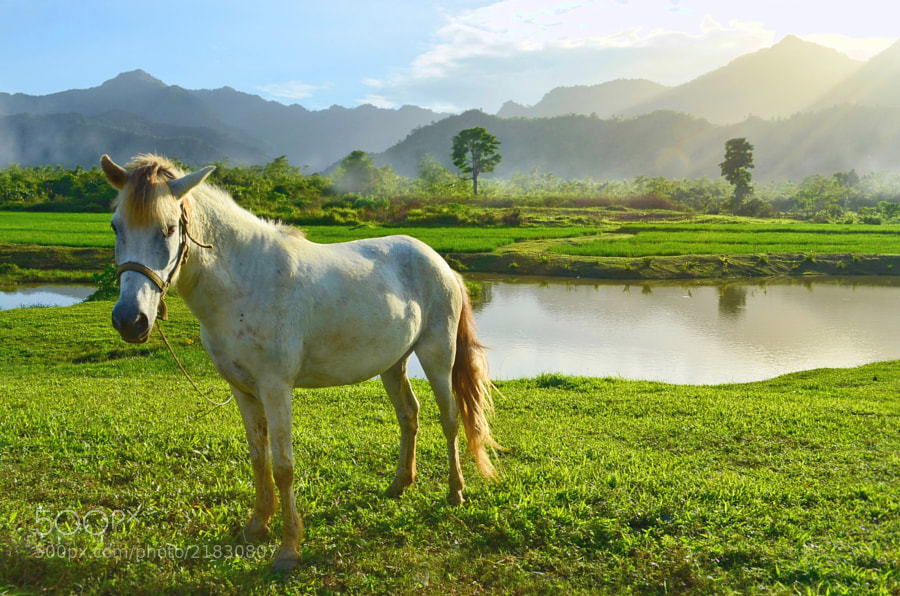 Photograph El caballo by Vey Telmo on 500px