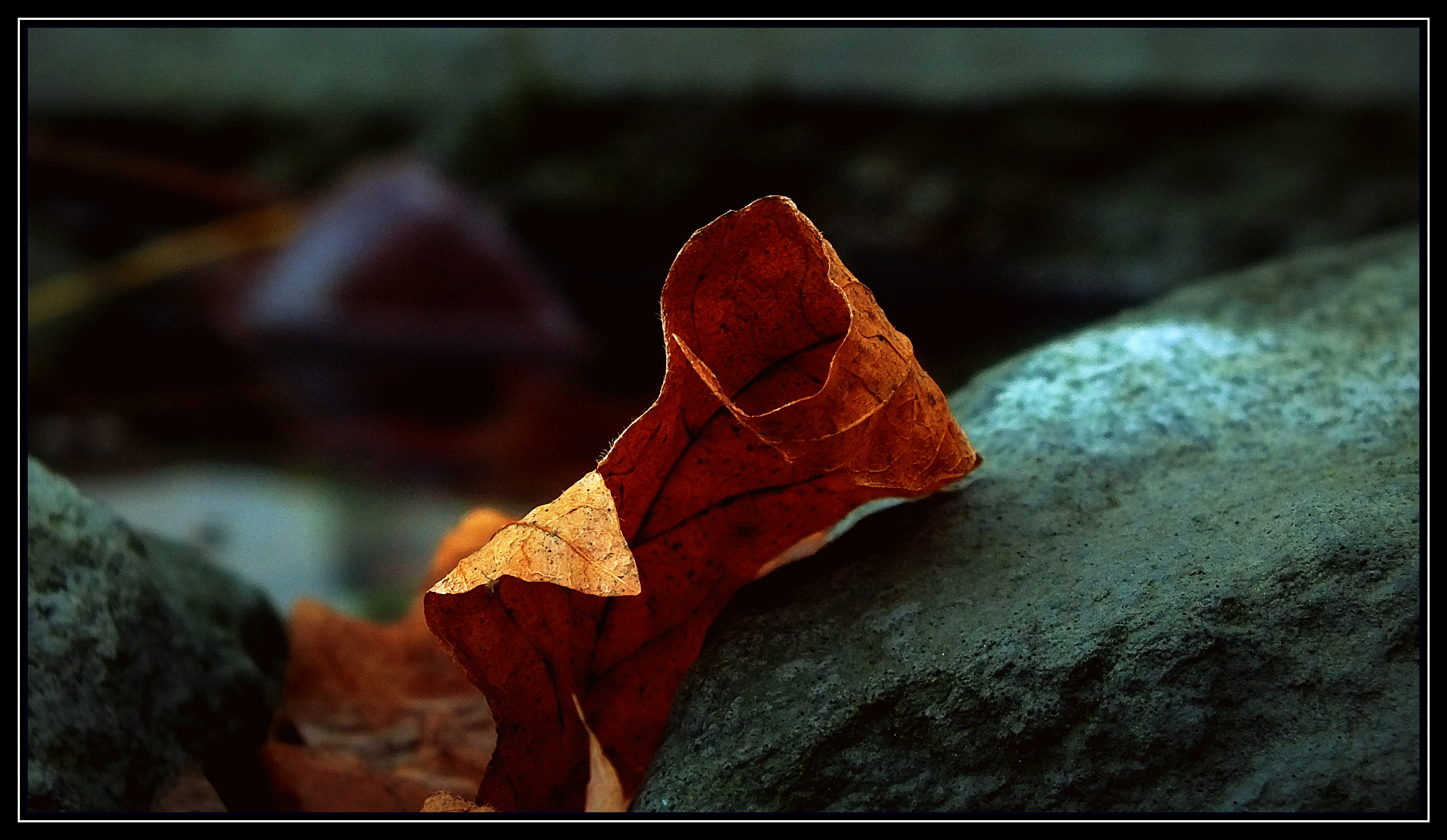 Photograph Between A Rock & A Hard Place by H. Becker on 500px