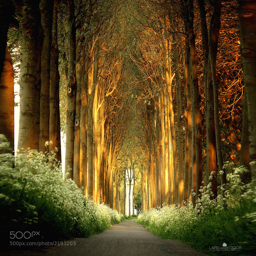 Photograph La Cathédrale Naturelle by Lars van de Goor on 500px