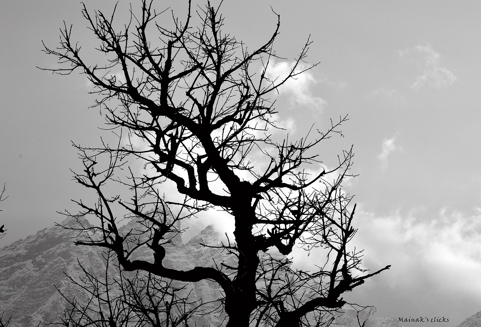 Photograph Every branch has a story... by Mainak Chaudhuri on 500px