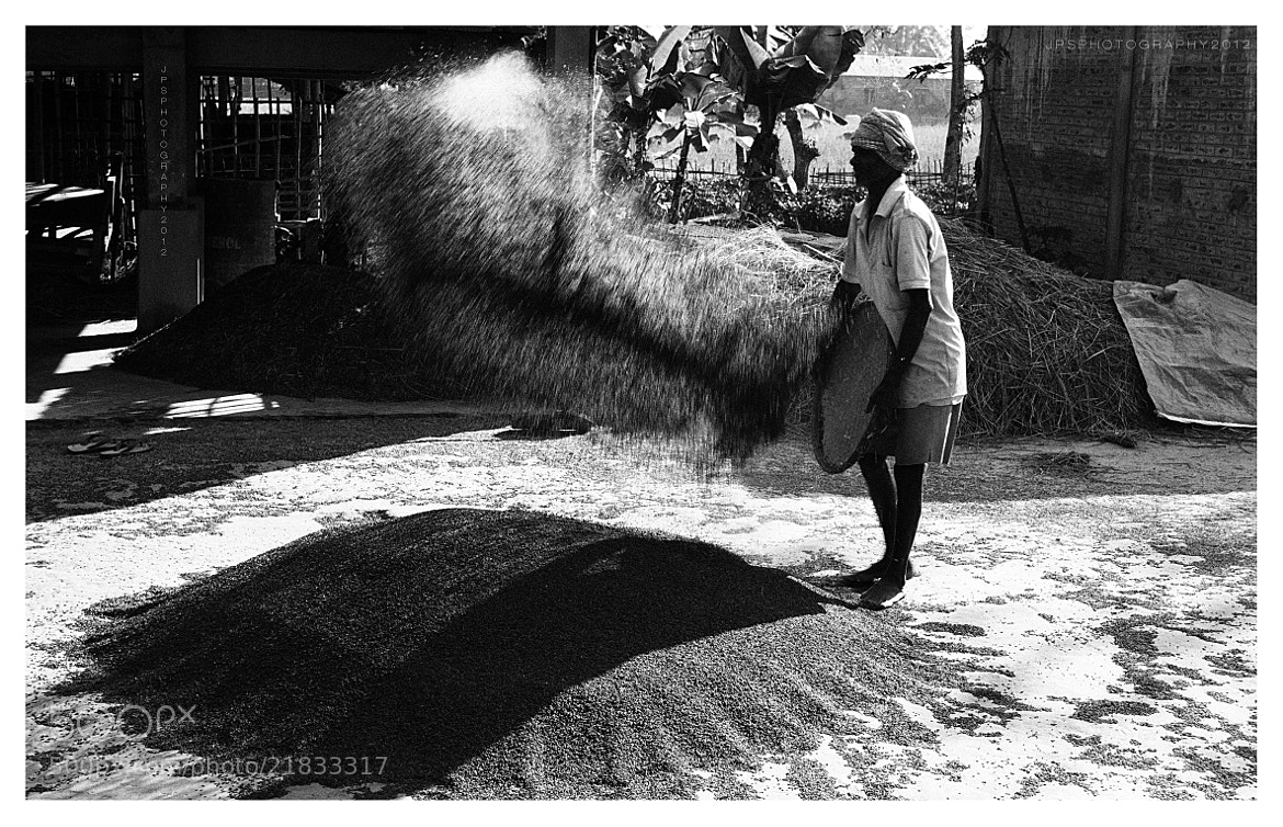 Photograph The final harvest. by Jyoti Prakash Sarmah on 500px
