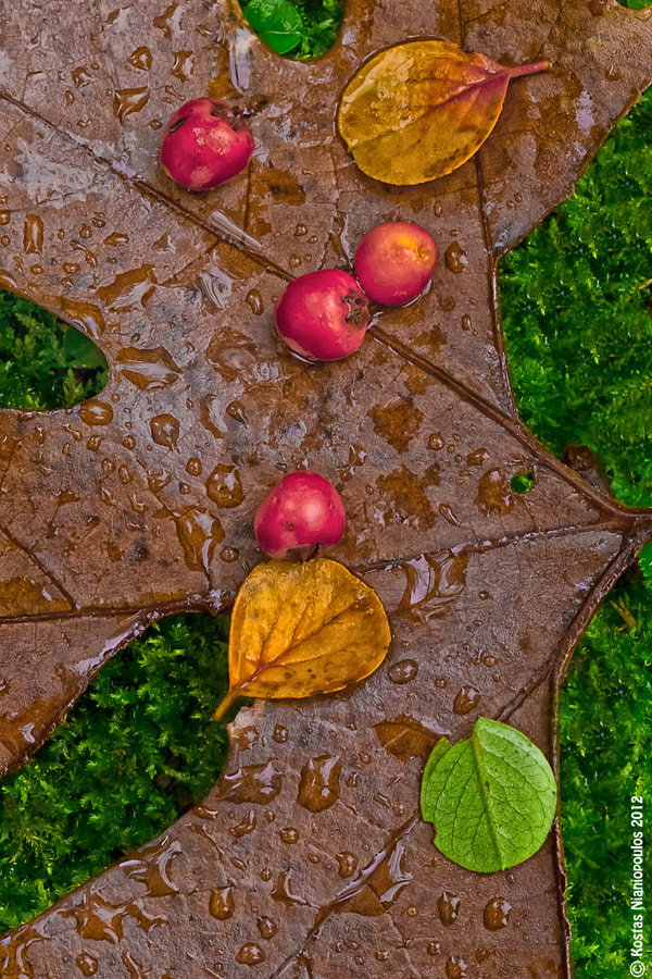 Photograph It's Wet by Kostas  Nianiopoulos on 500px