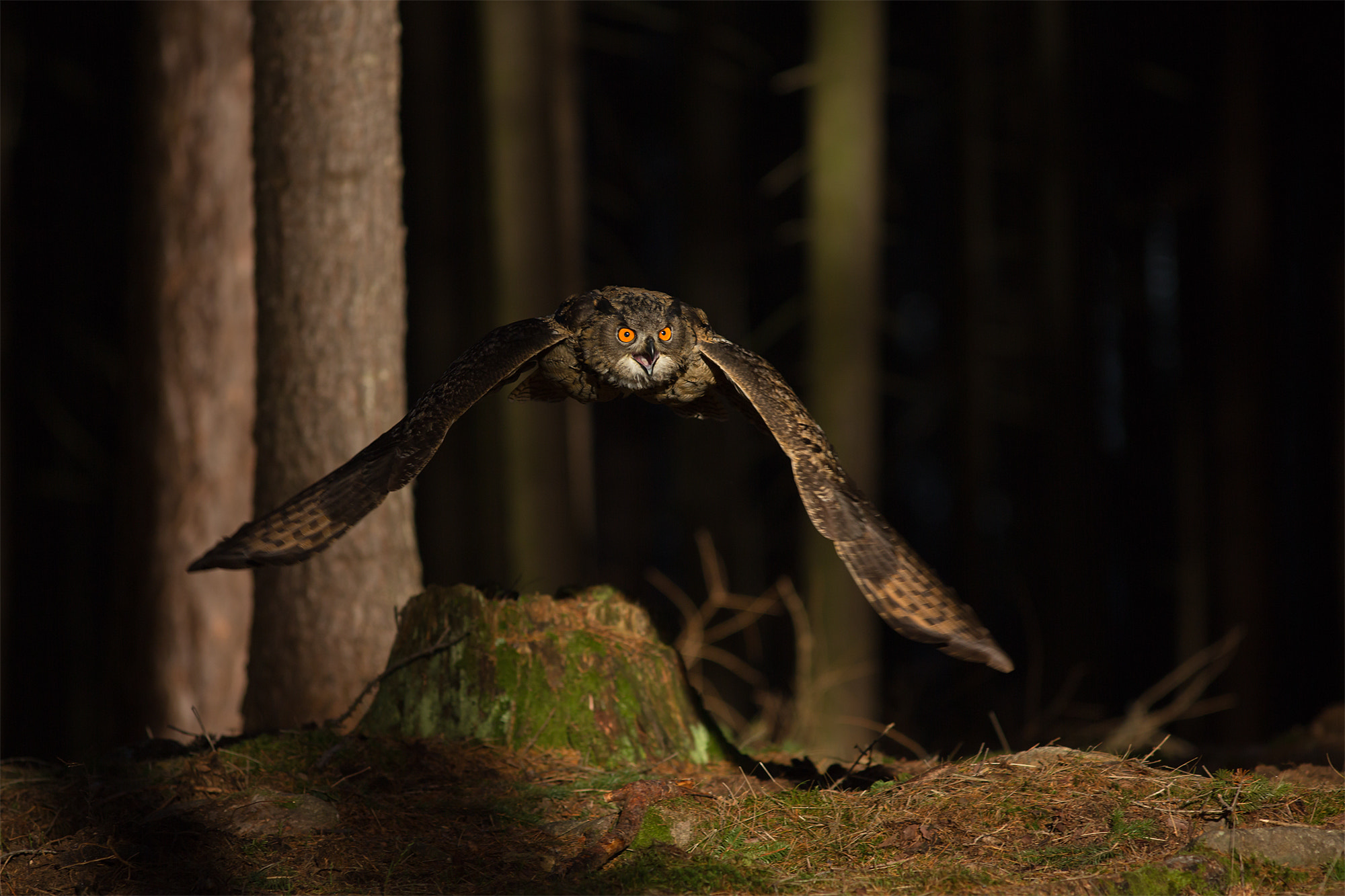 Photograph Eagle Owl by Milan Zygmunt on 500px