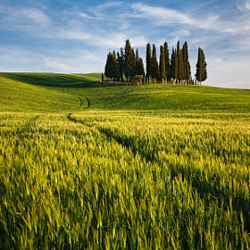 Grove by Daniel Řeřicha (Rericha)) on 500px.com