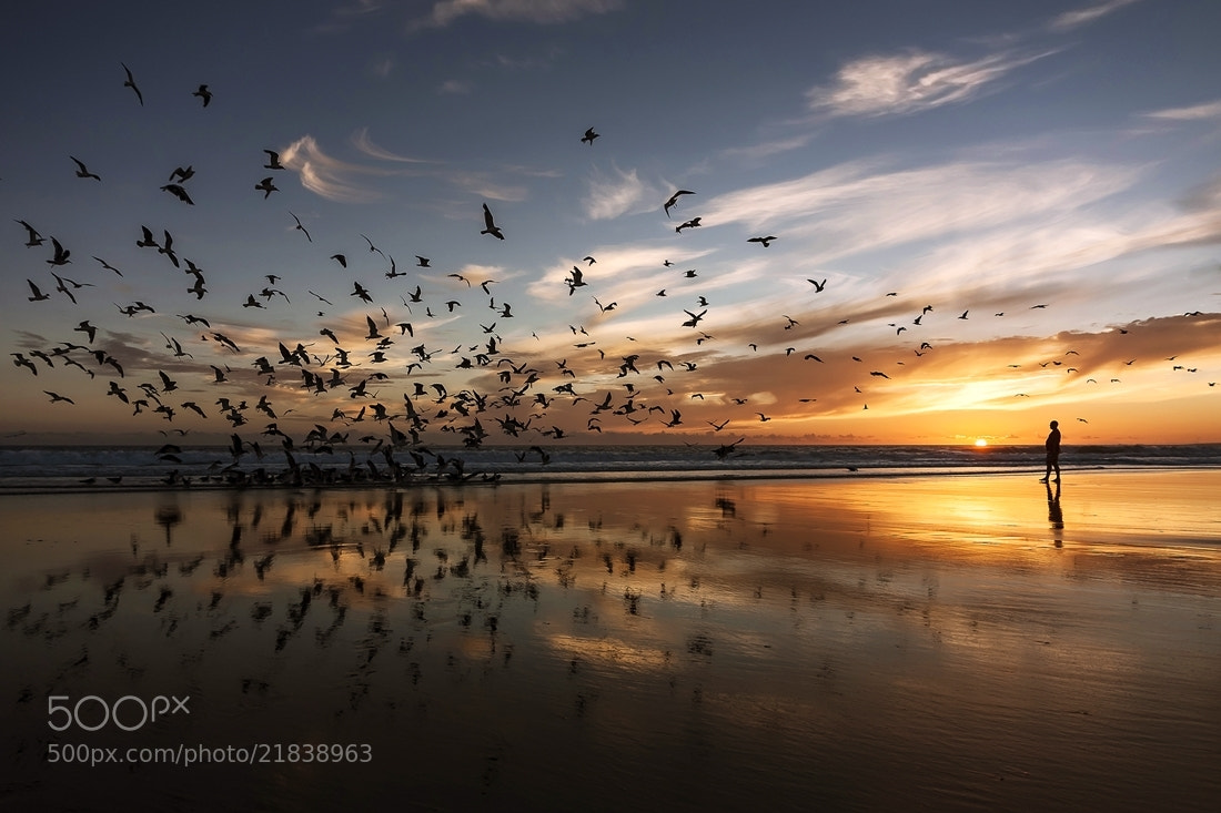 Photograph birds by António Leão de Sousa on 500px