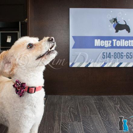 Fraichement toiletter!