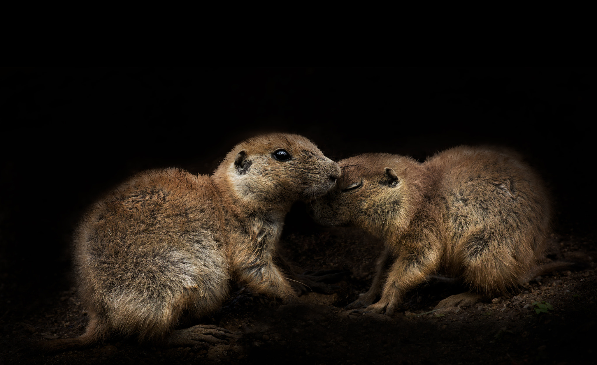 Photograph Love is in the Air! by Sue Demetriou on 500px