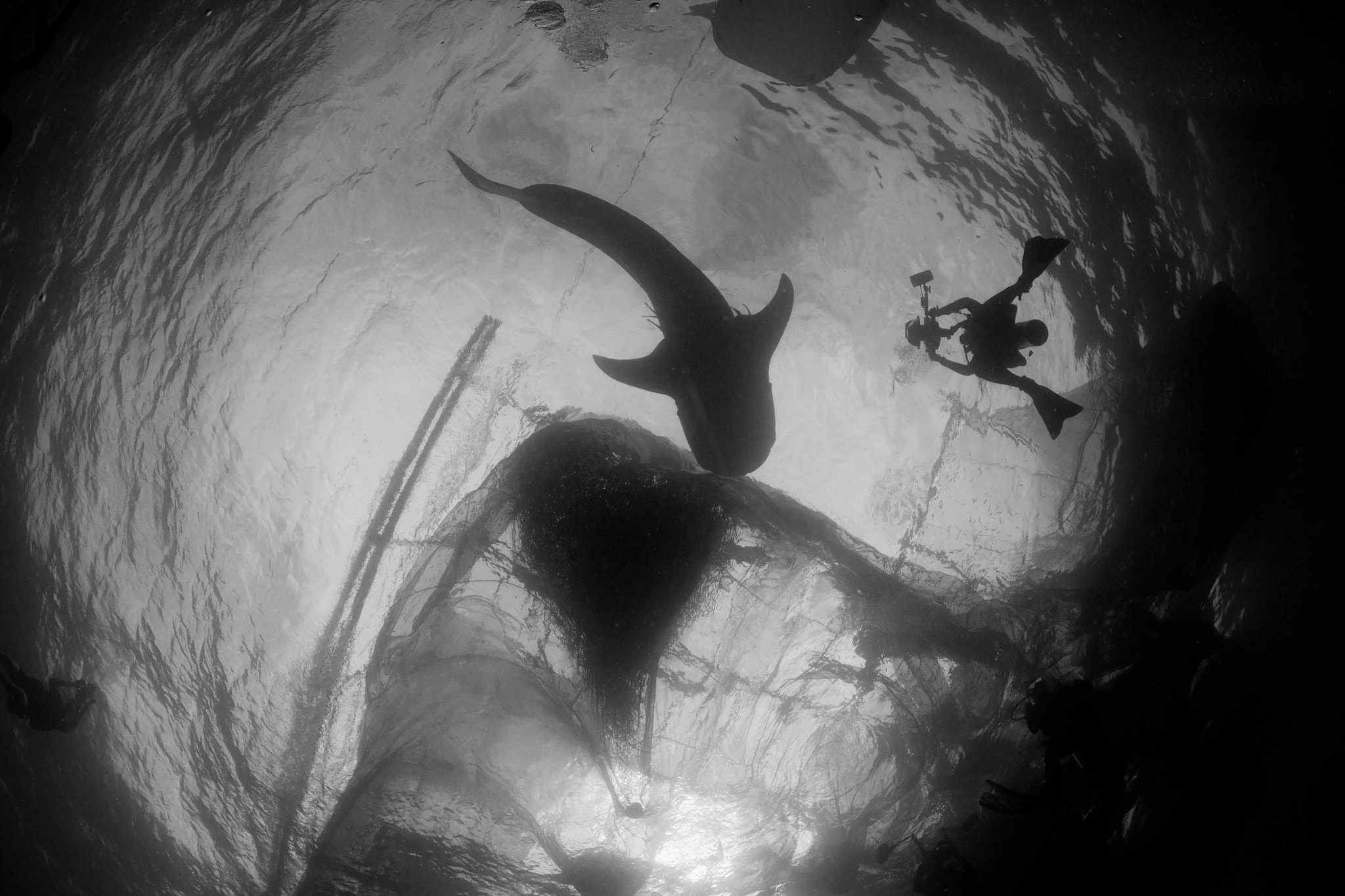Photograph whale shark and photographer silhouette by Paul Cowell on 500px