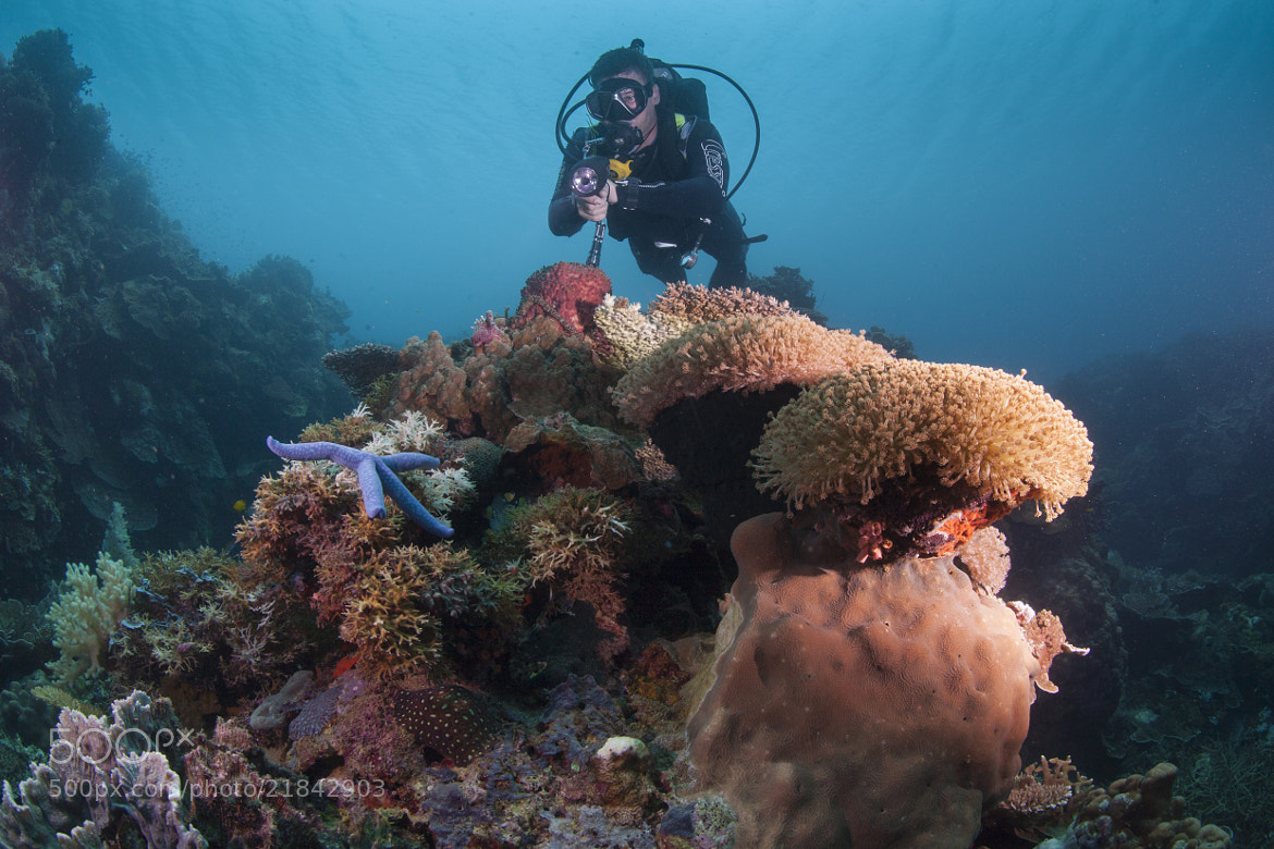 Photograph scuba diver assessing a reef by Paul Cowell on 500px