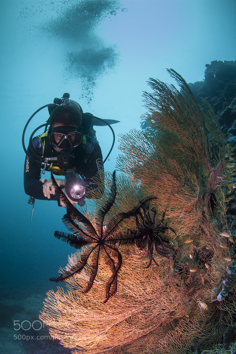 Photograph diver and the feather star by Paul Cowell on 500px