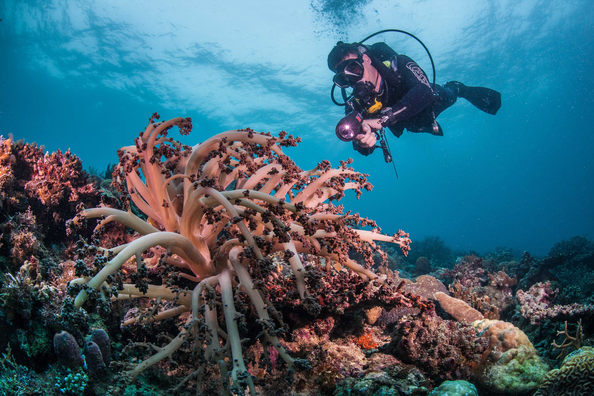 Photograph diver with soft coral by Paul Cowell on 500px
