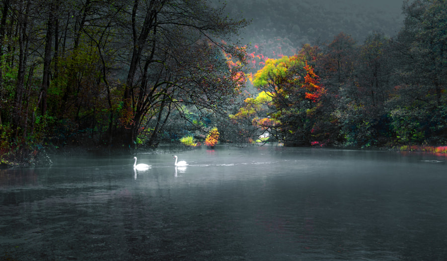 Swans by Mevludin Sejmenovic on 500px.com