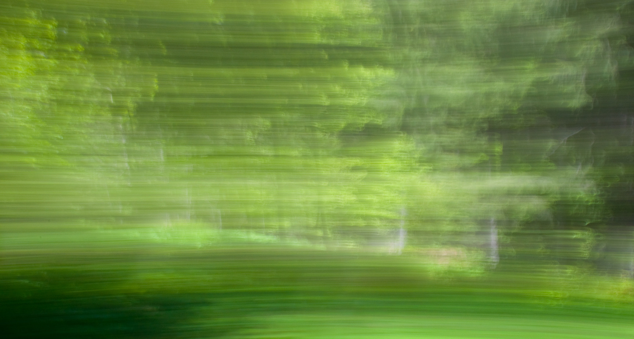 Photograph Green in Motion by Bianca Fuhrmann on 500px