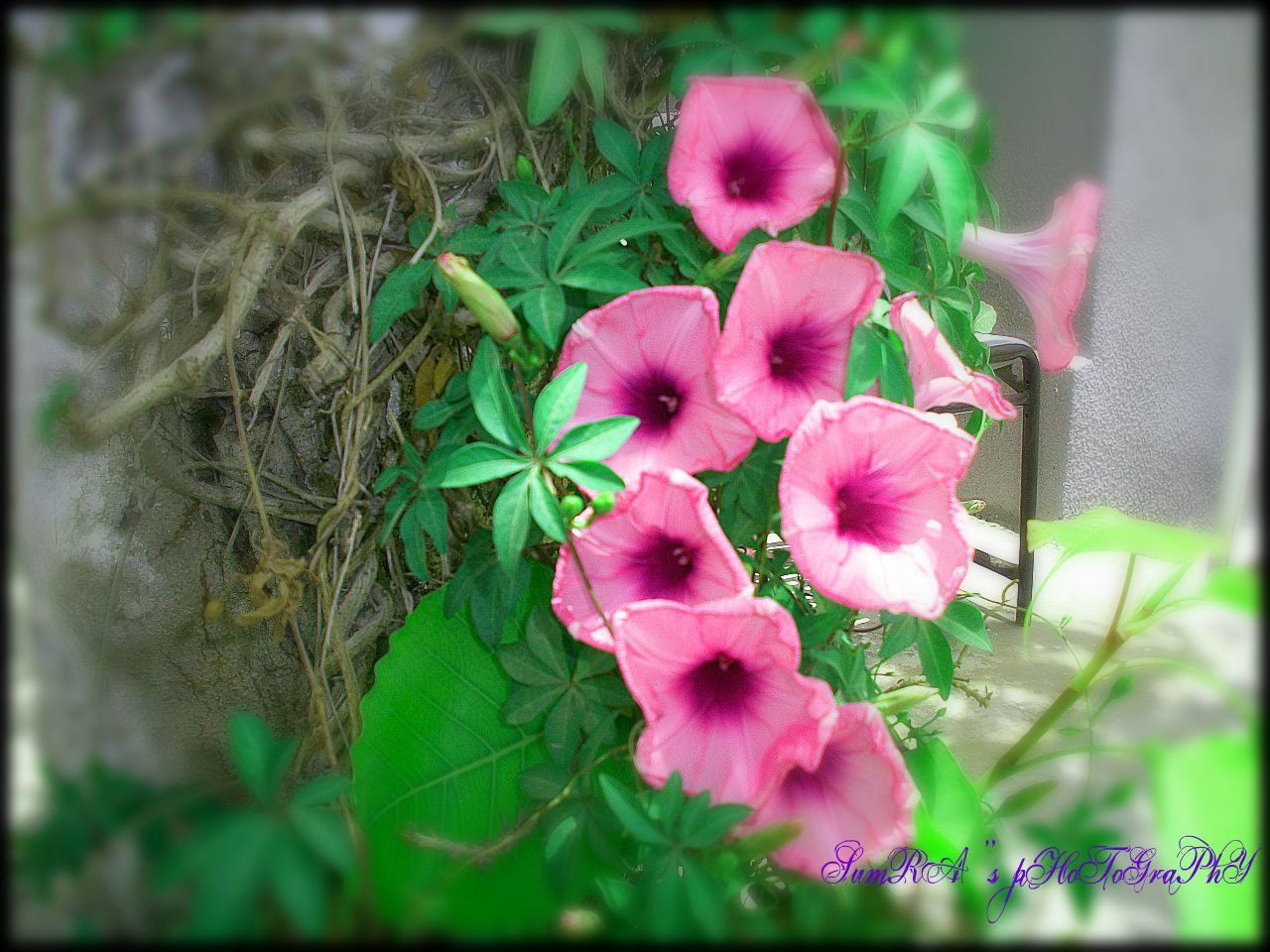 Photograph Flowers by Irum Sheikh on 500px