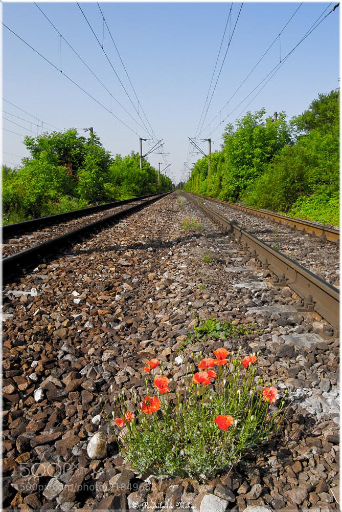 Photograph Railway in colors by Mişulikă Rădulescu on 500px