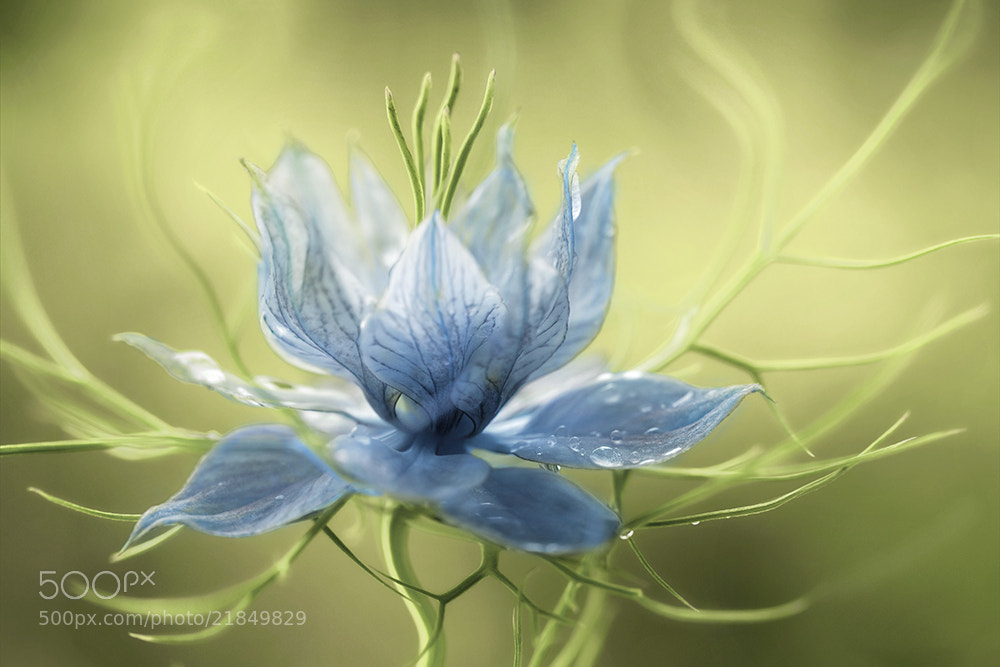 Photograph Nigella by Mandy Disher on 500px