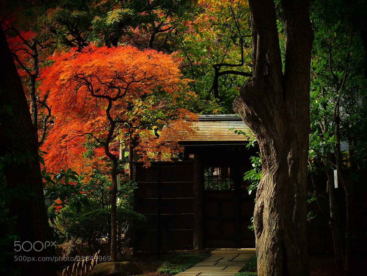 Photograph 訪ね人 by TOS1963 on 500px